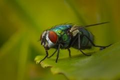 micro vlieg