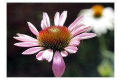 MVB_bloem
