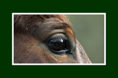 MVB_paardenoog