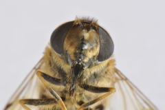OB_-macro-close-up-oscar-_DSC3240